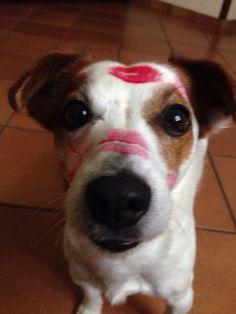 Это единственные следы которые люди должны оставлять на собаках #lovedoqs#dgack#rassel