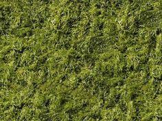 bush texture, tileable, texture fill