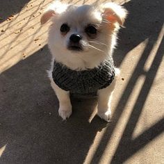 Items similar to Pet Clothing, Dog Sweater, Small Dog Clothes, Crochet Dog Sweater, Pet Sweater by BubaDog on Etsy Small Dog Sweaters, Small Dog Clothes, Puppy Clothes, Chihuahua Clothes, Crochet Dog Clothes, Crochet Dog Sweater, Dog Hoodie, Dog Shirt, Pull Crochet