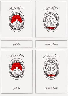 Elementary Observations: Parts of the Mouth FREE printable cards