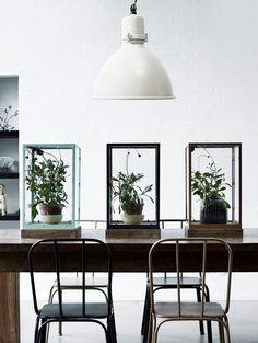 Leuke groene plantjes onder een rechthoekige stolp.