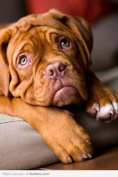 Beautiful photo of a cute face