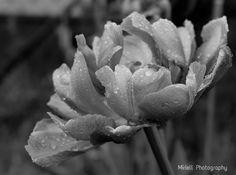 Succulents, Plants, Photography, Photograph, Fotografie, Succulent Plants, Photoshoot, Plant, Planets
