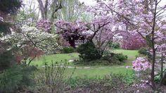 桜祭り Cherry Blossom Japanese Garden japanischer Garten ...