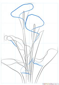 Flower sketches: How to draw a calla lily