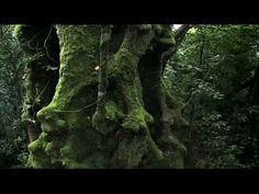 "Rainforest: Beneath the Canopy Part 01 - YouTube.  Introduction 1.13 minute - Aim of the video: discover the secrets of the  - Rainforest has survived through many harsh conditions, outlasting the dinosaurs times. - The importance of light is mostly considered.  Trees 1.15 - presents facts of rainforest trees (age, height, how sunlight allows them to survive)  Water 2.20  - Personification: ""these rivers and streams have the veins and arties of the rainforest ecosystem"" Birds, small crea"