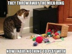I didn't throw it away, Wednesday, it's probably under the couch with every other cat toy ever.