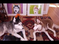 Another Mishka talking video with Laika....I want artwork like those in the background for my dog!!