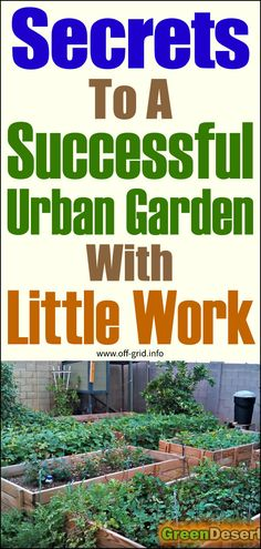 Here's some SUPER advice for the urban gardener, with tips on composting, watering, encouraging helpful insects the organic way and making raised beds for your food plants. Container Vegetables, Container Gardening, Gardening Tips, Off Grid Survival, Survival Tips, Farm Pictures, Garden Pictures, Making Raised Beds, Off The Grid