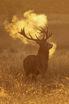 Red Deer Stag, Richmond Park © Craig Denford