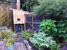 integrating chicken run into garden - Google Search