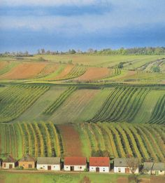 Weinviertel Kellergassen - Google-Suche Austria, See It, Vineyard, Lavender, Amazing, Places, Google, Outdoor, Photos