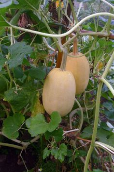 10 best garden crops to grow this summer (can be planted midsummer for fall harvest)