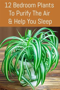 Scatter some of these houseplants around your bedroom to purify and cleanse the air and improve your sleep.