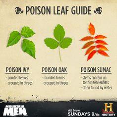 Identification of poison ivy, poison oak and Poison sumac