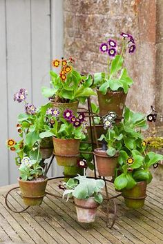 Auricula Stand with Terracotta Pots