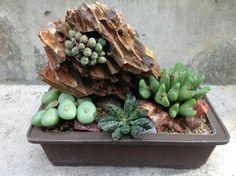 Conophytum rock after rain, Ken Uy