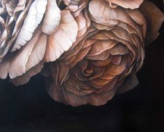 Sophie Wilkins Roses