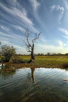 Kakadu - Northern Territory - LinkedIn Guides (kakadu - australia)