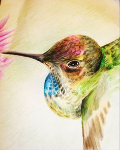 Colored Pencil I like the angle of the hummingbird, just wondering where other wing is