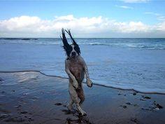 Recentemente, publicamos uma matéria com diversas fotos de momentos que são a definição do timing perfeito. Agora, fizemos uma seleção de imagens criativas de cães, capturadas exatamente na hora certa.