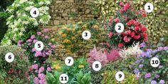 Comment fleurir un mur au nord  1_Lierre panaché 2_Camélia 3_Chèvrefeuille x tellmaniana 4_Hortensia grimpant 5_Hortensia rose