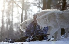 Gorgeous photos of the Wolf Man interacting with the packs. He acts as their alpha male. Wolfspark Werner Freund is a wolf sanctuary spread over 25 acres in western Germany. It is home to 29 wolves -- six distinct packs hailing from Europe, Siberia, Canada, the Arctic, and Mongolia. Researcher Werner Freund, 79, a former German paratrooper, established the sanctuary in 1972 and has raised more than 70 animals there over the last 40 years.