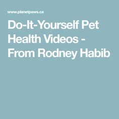 Do-It-Yourself Pet Health Videos - From Rodney Habib Pet Health, Health Tips, Homemade Dog, Diy Stuffed Animals, Dog Food Recipes, Your Pet, Pets, Healthy, Videos