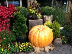 It's a giant pumpkin, Charlie Brown! On display - along with several other cool varities - at Chalet Nursery. More at www.chaletnursery.com.