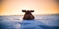 Teddy Moose by somebodyanywhere Still Life, Board, Instagram, Sunlight, Moose, Facebook, Sun Light, Nikko, Mousse