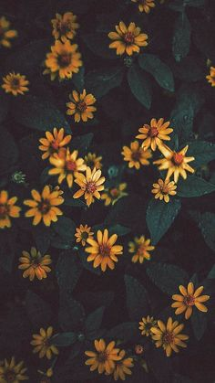 Trendy Wallpaper, Tumblr Wallpaper, Pretty Wallpapers, Nature Wallpaper, Aesthetic Backgrounds, Aesthetic Iphone Wallpaper, Aesthetic Wallpapers, Flower Phone Wallpaper, Galaxy Wallpaper