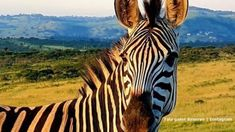 Tala Game Reserve Conference Facilities, Kwazulu Natal, Car Sit, Bird Species, Day Trips, South Africa, Giraffe, Picnic