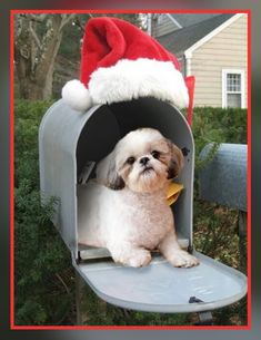 """Check out our internet site for even more details on """"shih tzu puppies"""". It is an outstanding area to read more. Baby Shih Tzu, Shih Tzu Puppy, Shih Tzus, Cute Puppies, Cute Dogs, Dogs And Puppies, Doggies, Christmas Animals, Christmas Dog"""