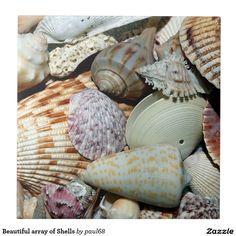 Beautiful array of Shells Tile