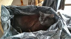 Difficult to use the bin when Coco is sleeping in it Bag Making, Sleep, Decor, Decoration, Decorating, Dekorasyon, Dekoration, Catfish, Home Accents