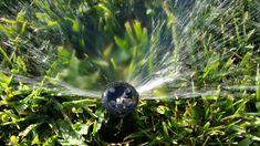 Dwell Boise: Spring Fling Home Maintenance Tip: Fire up those S. Sprinkler System Installation, Lawn Sprinkler System, Lawn Sprinklers, Water Systems, Outdoor Landscaping, Irrigation, Go Outside, Horticulture, Bald Eagle