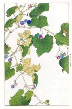 杉浦非水の植物画 - 装丁家・大貫伸樹の装丁挿絵探検隊