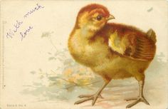chick stands at right of card looking back to right