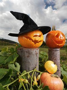 halloween deko ideen kuerbis schnitzen