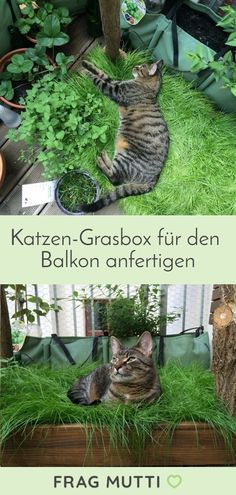 Make a cat grass box for the balcony-Katzen-Grasbox für den Balkon herstellen Make a cat grass box for the balcony. A paradise for domestic cats. Cat Grass, Hydrangea Care, Balkon Design, Gatos Cats, Terrace Garden, Domestic Cat, Back Gardens, Houseplants, Indoor Plants