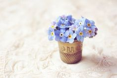 Oh my! Tiny floral friends - forget-me-not in a thimble (via Gatherings Magazine)