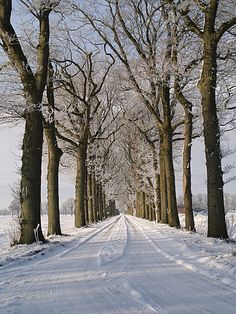 Snowy road in Assen, Drenthe Winter Sunset, Winter Scenery, Winter Trees, Winter Landscape, Landscape Photos, I Love Winter, Foto Art, Winter Beauty, Winter Pictures