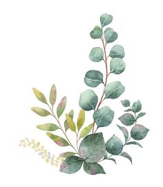 Watercolor Flowers Discover Watercolor bouquet with green eucalyptus leaves and branches. Illustration of Watercolor bouquet with green eucalyptus leaves and branches. vector art clipart and stock vectors. Watercolor Plants, Watercolor Leaves, Watercolor Background, Watercolor Landscape, Watercolor Paintings, Simple Watercolor, Tattoo Watercolor, Watercolor Animals, Abstract Watercolor