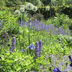 Sådan skaber du en harmonisk have fuld af farver Tricks, Planters, Herbs, Garden, Inspiration, Patio, Garten, Biblical Inspiration, Gardening