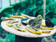 """Mi piace"": 36, commenti: 2 - Silvia Lombardi (@princessinthecities) su Instagram: ""Dinner time! A #butterfly having her meal in #iguazufalls aves park. I didn't know that they eat…"""