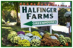 OMG....I worked here when I was 14 years old, picking strawberries in a hot field!