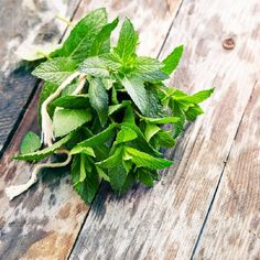 Shop for Mint Seeds by the Packet or Pound.Com offers Hundreds of Seed Varieties, Including the Finest and Freshest Culinary Herb Seeds Anywhere. Herb Seeds, Garden Seeds, Growing Mint, Flower Garden Plans, Mint Plants, Growing Gardens, Marijuana Plants, Seed Packets
