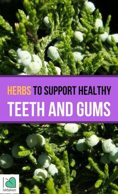 Herbs For Teeth & Gums