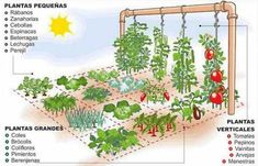Turn Your Patio Into A Voluminous Vegetable Garden Eco Garden, Edible Garden, Dream Garden, Garden Plants, Smart Garden, Plan Potager, Potager Bio, Square Foot Gardening, Green Life