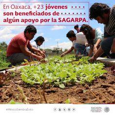 En Oaxaca +23 jóvenes son beneficiados de algún apoyo por la SAGARPA. SAGARPAMX #MéxicoSiembraÉxito